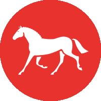 Show Horses